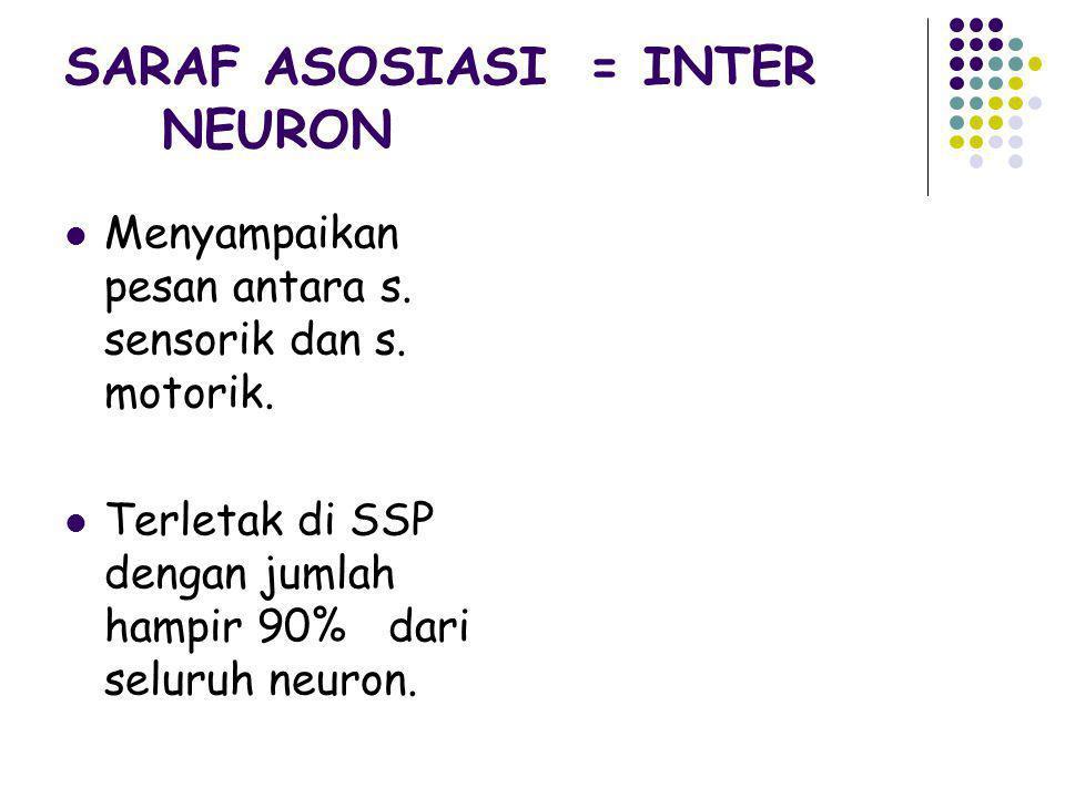 SARAF ASOSIASI = INTER NEURON