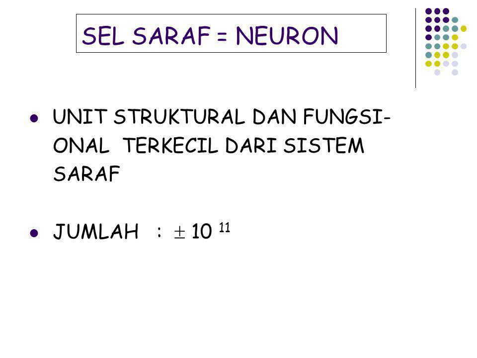 SEL SARAF = NEURON UNIT STRUKTURAL DAN FUNGSI-