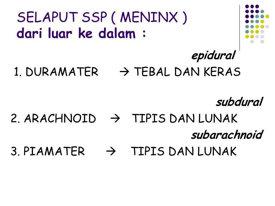 SELAPUT SSP ( MENINX ) dari luar ke dalam :