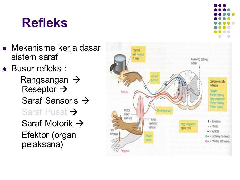 Refleks Mekanisme kerja dasar sistem saraf Busur refleks :
