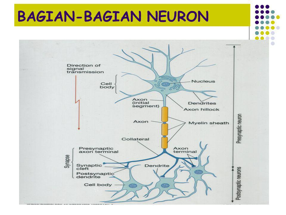 BAGIAN-BAGIAN NEURON