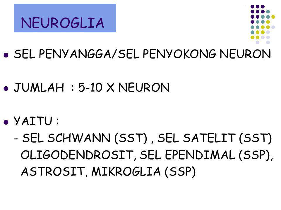 NEUROGLIA SEL PENYANGGA/SEL PENYOKONG NEURON JUMLAH : 5-10 X NEURON