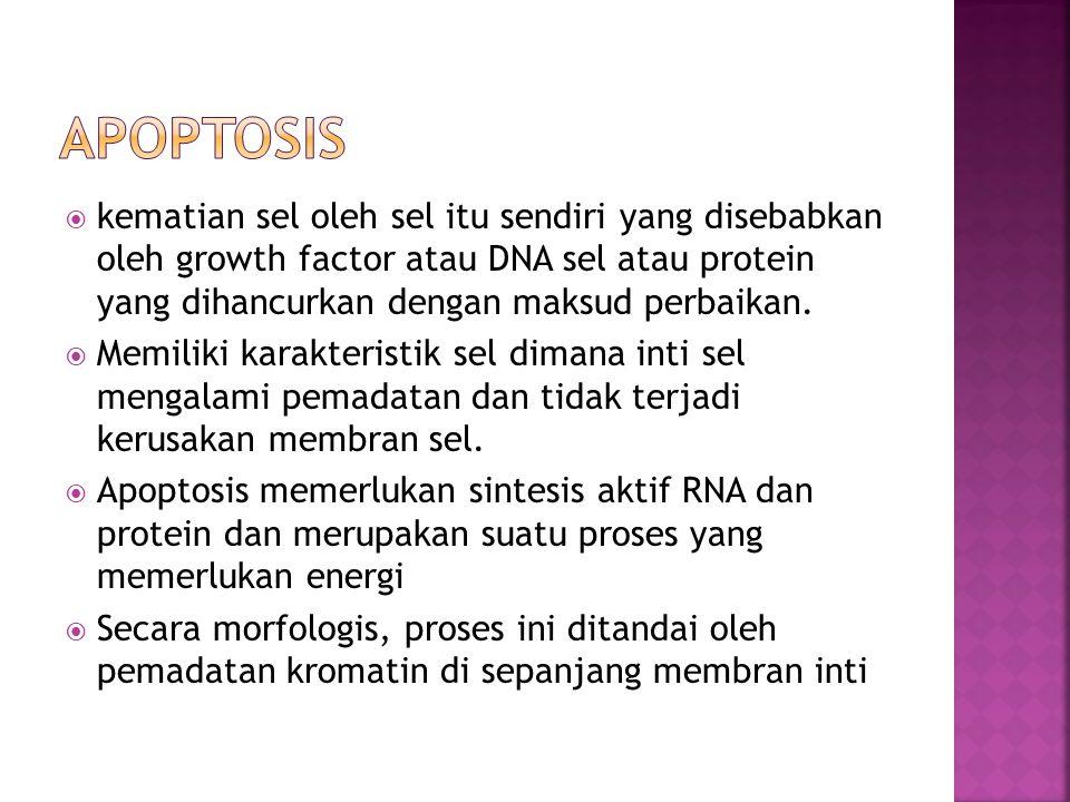 Apoptosis kematian sel oleh sel itu sendiri yang disebabkan oleh growth factor atau DNA sel atau protein yang dihancurkan dengan maksud perbaikan.