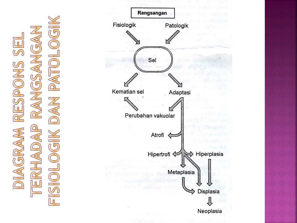 Diagram respons sel terhadap rangsangan fisiologik dan patologik