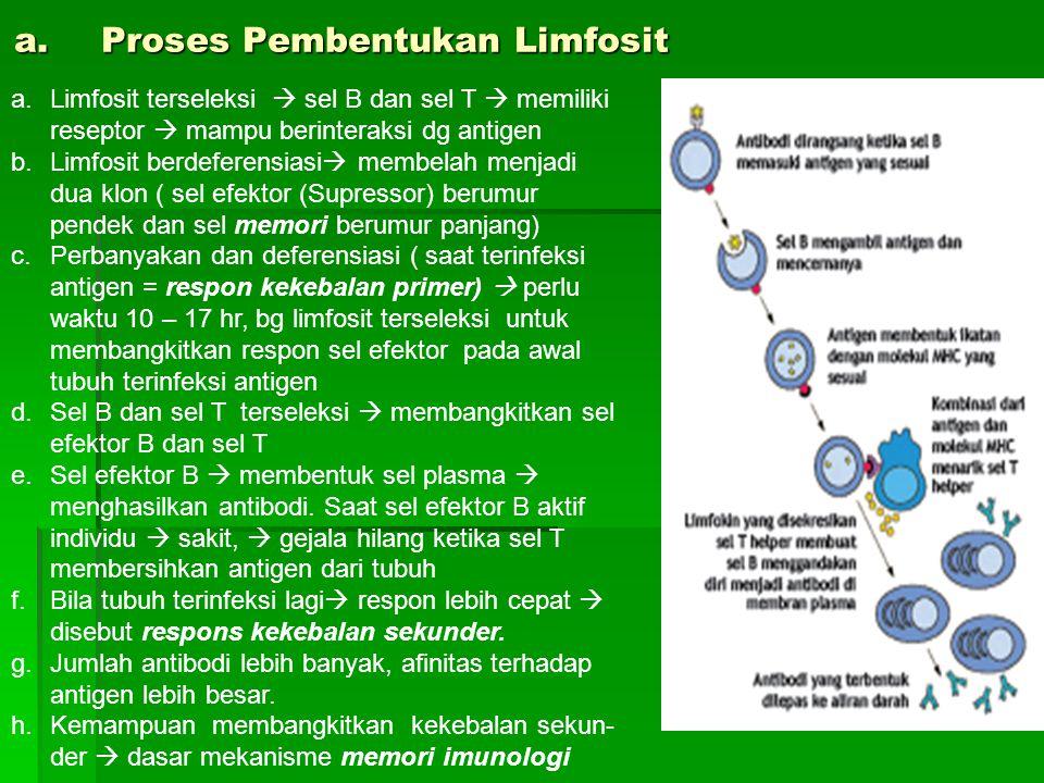Proses Pembentukan Limfosit