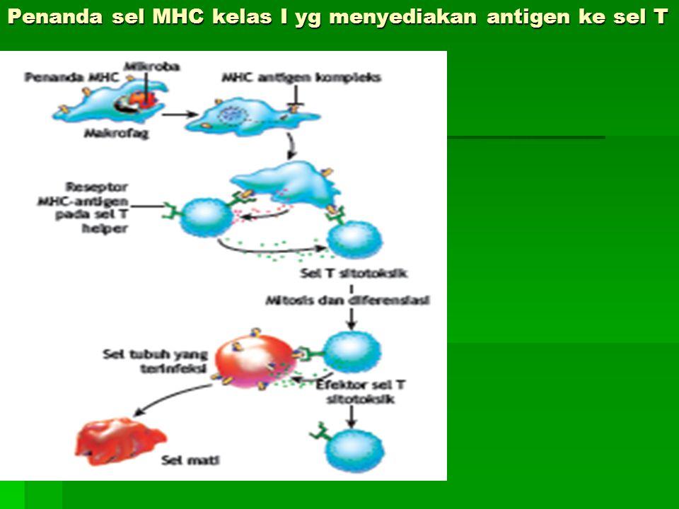 Penanda sel MHC kelas I yg menyediakan antigen ke sel T