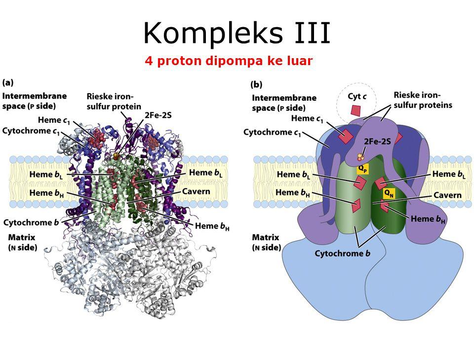 Kompleks III 4 proton dipompa ke luar KI3061 Zeily Nurachman