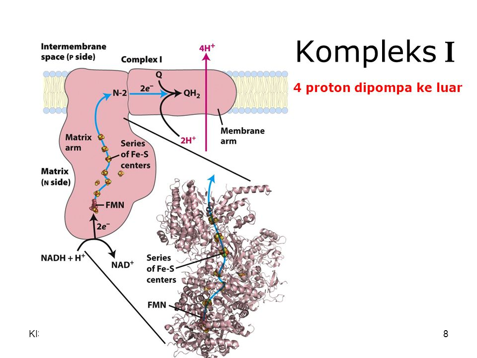 Kompleks I 4 proton dipompa ke luar KI3061 Zeily Nurachman