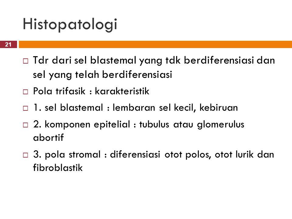Histopatologi Tdr dari sel blastemal yang tdk berdiferensiasi dan sel yang telah berdiferensiasi. Pola trifasik : karakteristik.