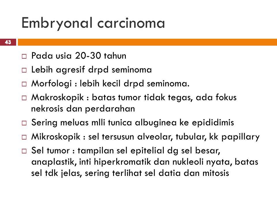 Embryonal carcinoma Pada usia 20-30 tahun Lebih agresif drpd seminoma
