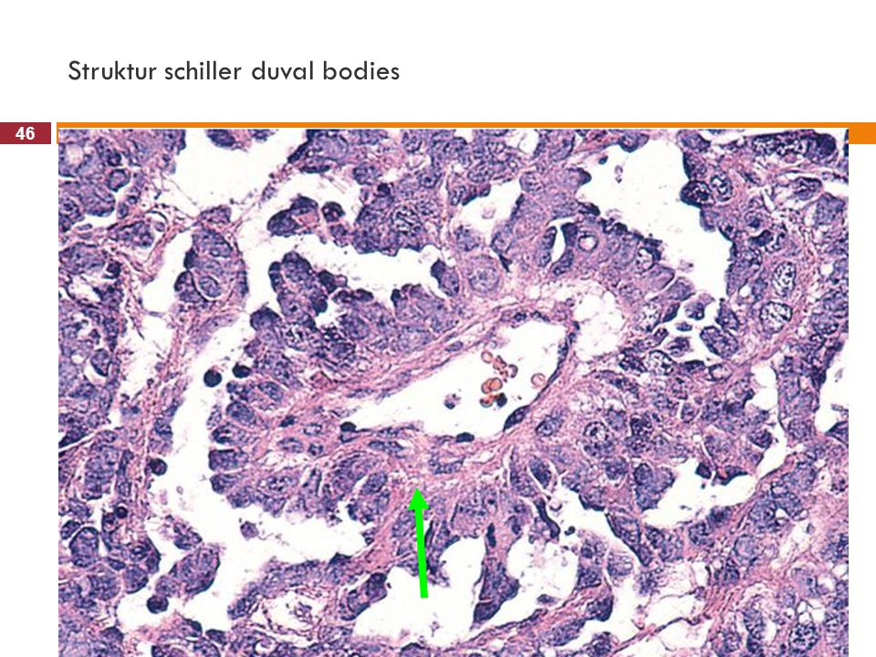 Struktur schiller duval bodies