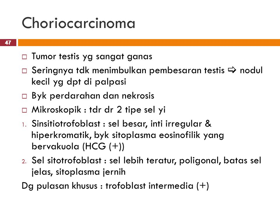 Choriocarcinoma Tumor testis yg sangat ganas