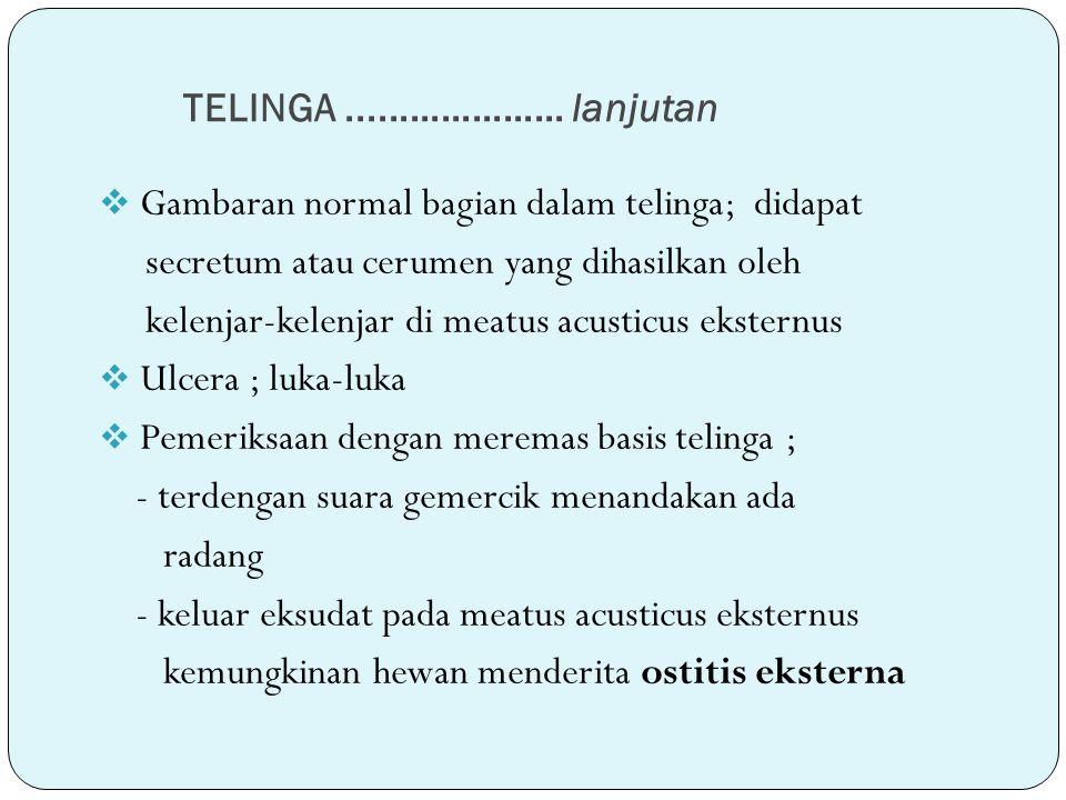 TELINGA ..................... lanjutan Gambaran normal bagian dalam telinga; didapat. secretum atau cerumen yang dihasilkan oleh.
