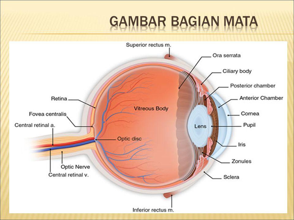Gambar bagian mata