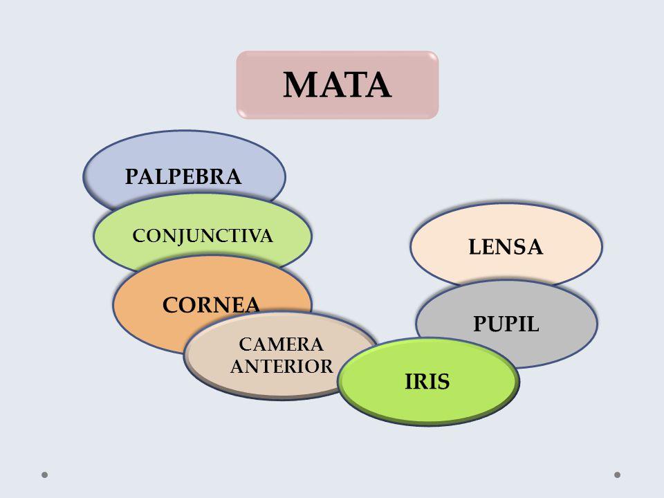 MATA PALPEBRA CONJUNCTIVA LENSA CORNEA PUPIL CAMERA ANTERIOR IRIS