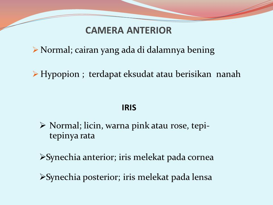 CAMERA ANTERIOR Normal; cairan yang ada di dalamnya bening