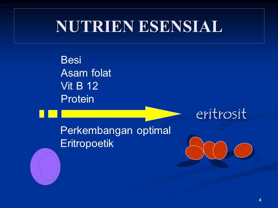 NUTRIEN ESENSIAL eritrosit Besi Asam folat Vit B 12 Protein