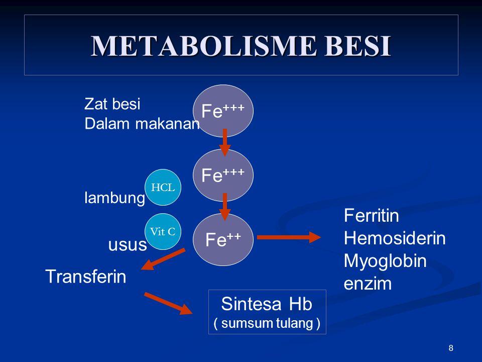 METABOLISME BESI Fe+++ Fe+++ Ferritin Hemosiderin Fe++ Myoglobin usus