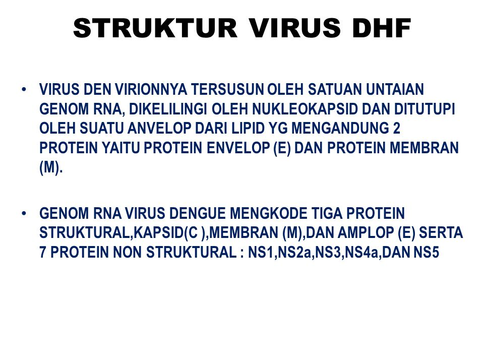 STRUKTUR VIRUS DHF