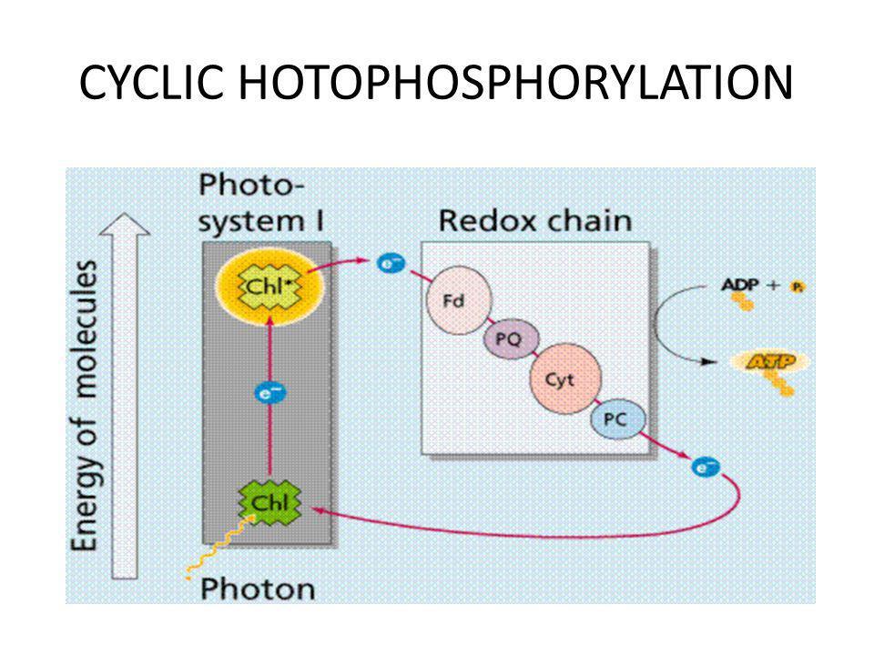 CYCLIC HOTOPHOSPHORYLATION