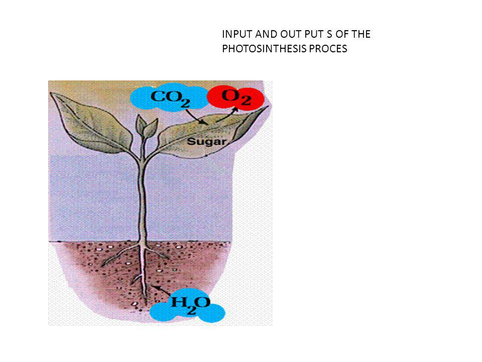 INPUT AND OUT PUT S OF THE PHOTOSINTHESIS PROCES