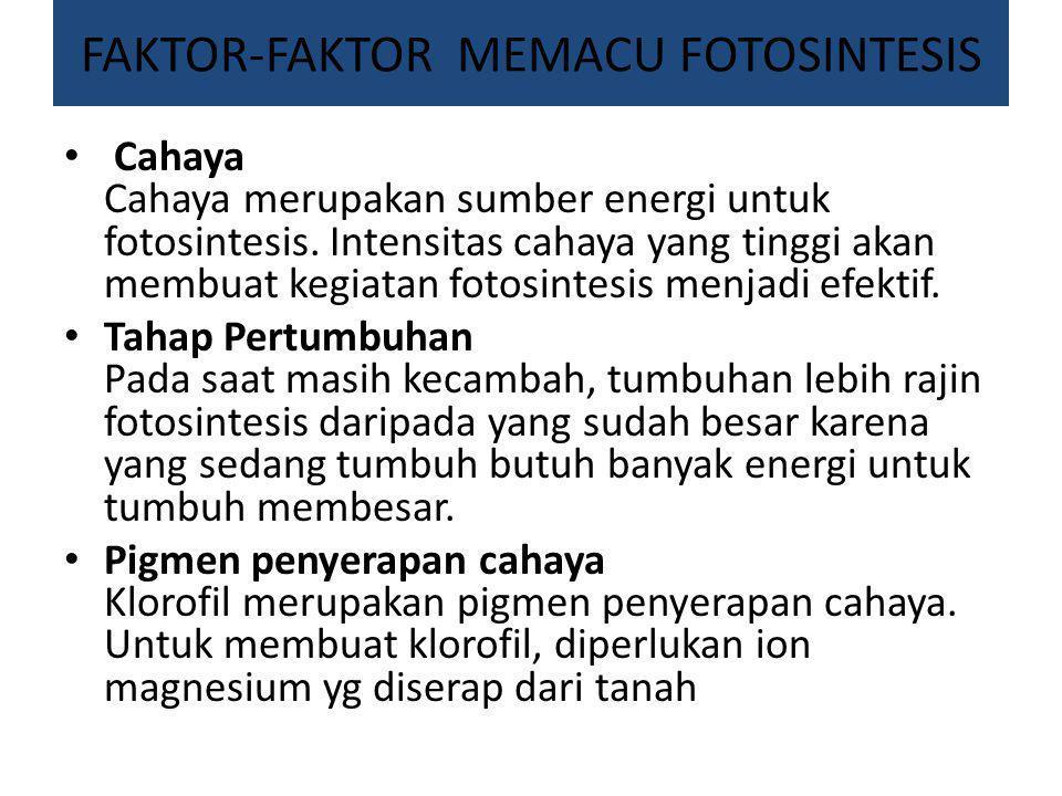 FAKTOR-FAKTOR MEMACU FOTOSINTESIS