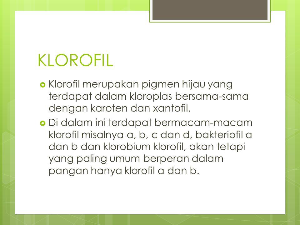 KLOROFIL Klorofil merupakan pigmen hijau yang terdapat dalam kloroplas bersama-sama dengan karoten dan xantofil.