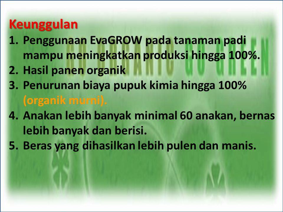 Keunggulan Penggunaan EvaGROW pada tanaman padi mampu meningkatkan produksi hingga 100%. Hasil panen organik.