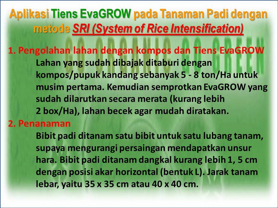 Aplikasi Tiens EvaGROW pada Tanaman Padi dengan metode SRI (System of Rice Intensification)