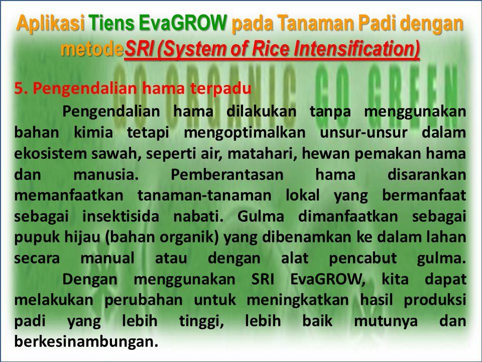 Aplikasi Tiens EvaGROW pada Tanaman Padi dengan metodeSRI (System of Rice Intensification)