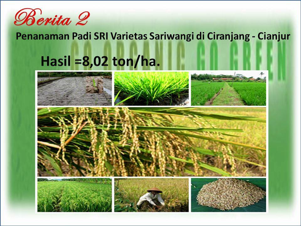 Berita 2 Penanaman Padi SRI Varietas Sariwangi di Ciranjang - Cianjur Hasil =8,02 ton/ha.