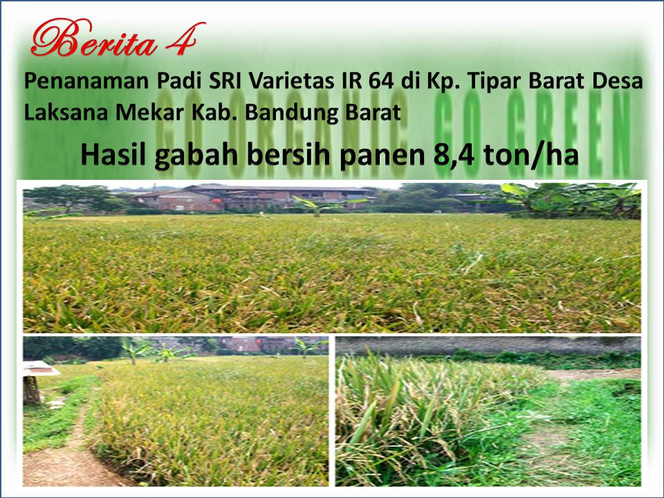Berita 4 Hasil gabah bersih panen 8,4 ton/ha