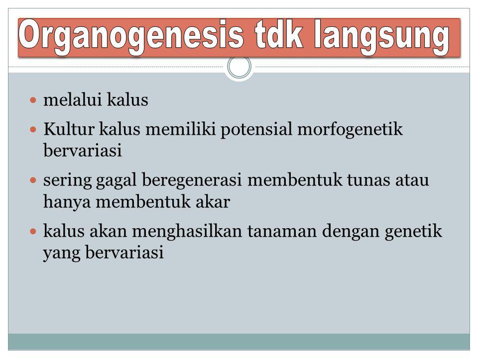 Organogenesis tdk langsung