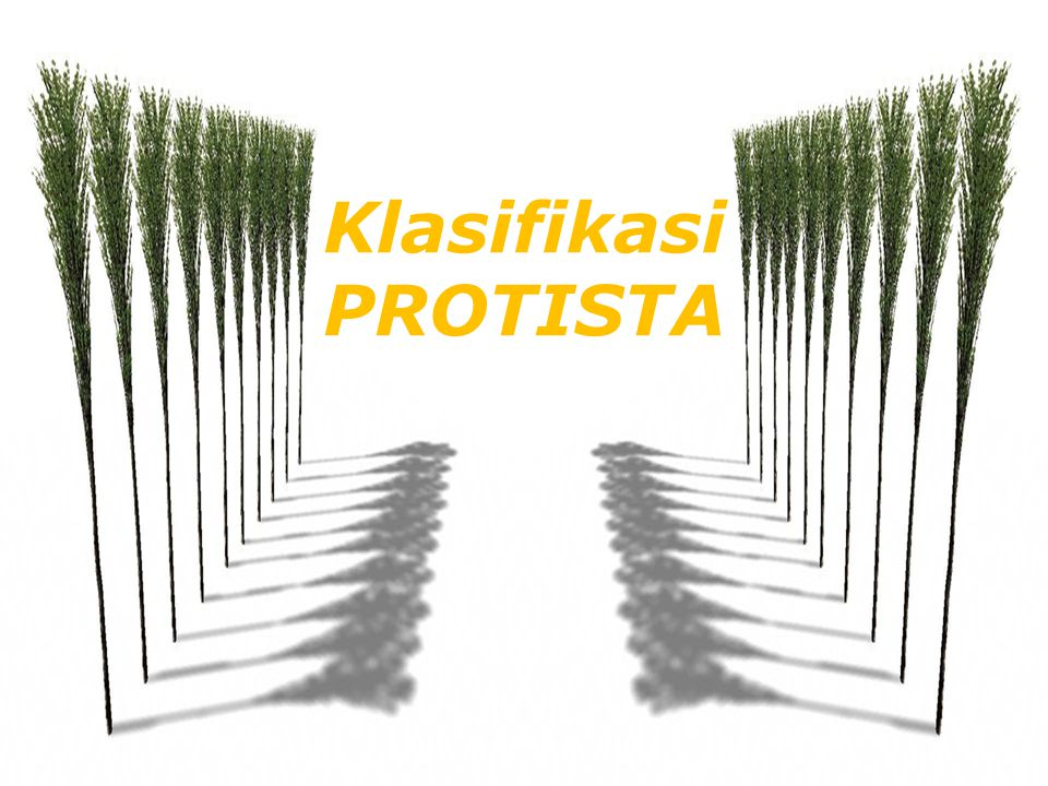 Klasifikasi PROTISTA
