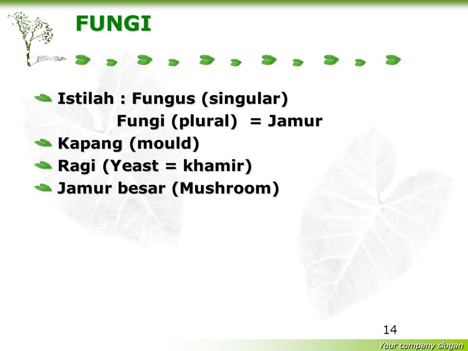 FUNGI Istilah : Fungus (singular) Fungi (plural) = Jamur