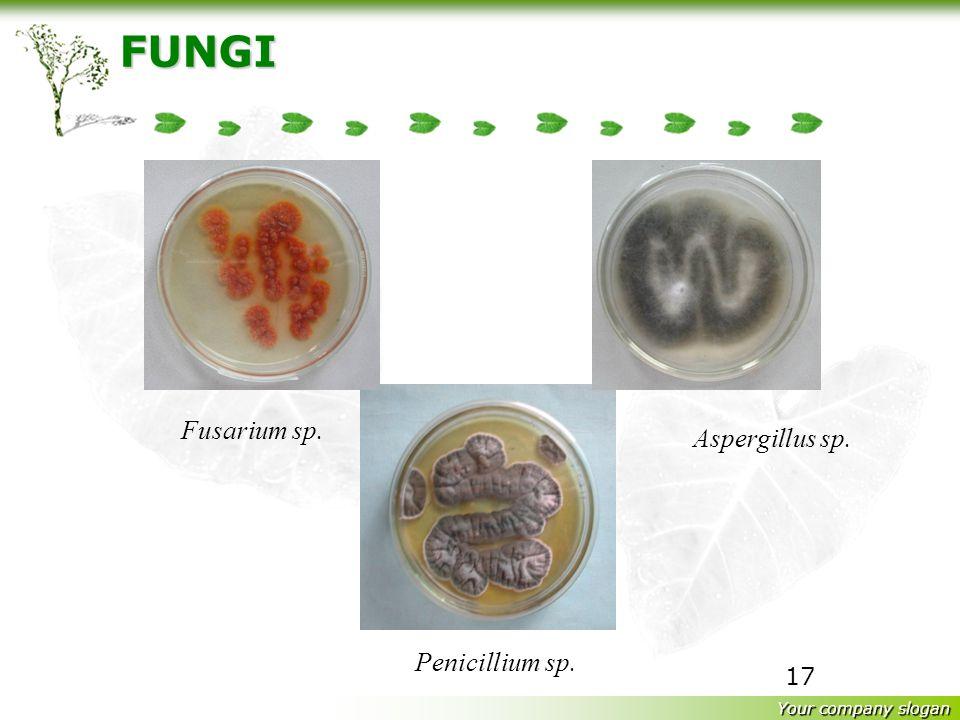 FUNGI Fusarium sp. Aspergillus sp. Penicillium sp.