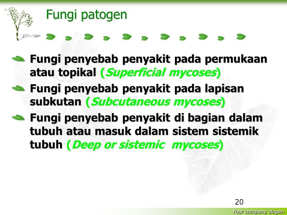 Fungi patogen Fungi penyebab penyakit pada permukaan atau topikal (Superficial mycoses)