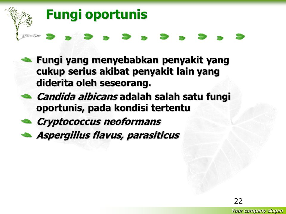 Fungi oportunis Fungi yang menyebabkan penyakit yang cukup serius akibat penyakit lain yang diderita oleh seseorang.