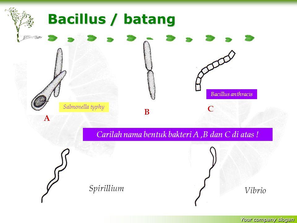 Carilah nama bentuk bakteri A ,B dan C di atas !