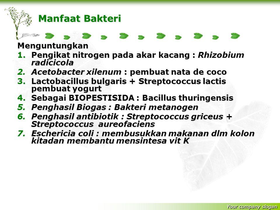 Manfaat Bakteri Menguntungkan