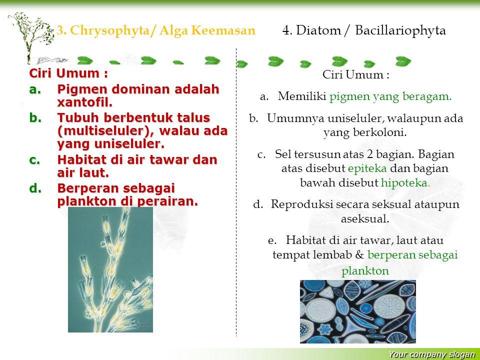 3. Chrysophyta / Alga Keemasan