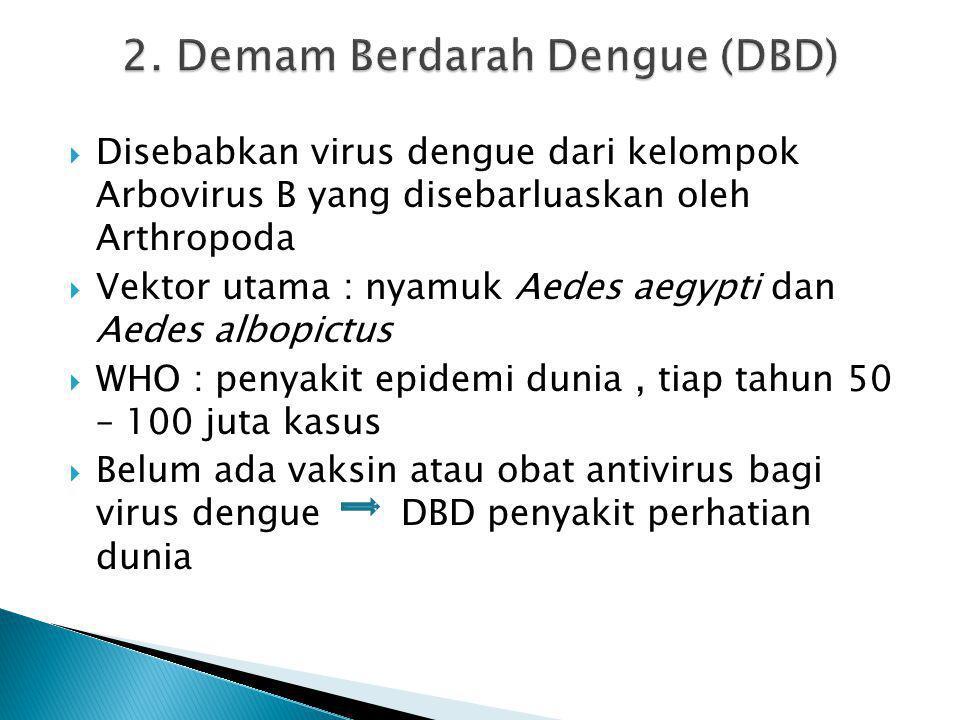 2. Demam Berdarah Dengue (DBD)