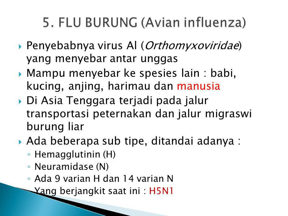 5. FLU BURUNG (Avian influenza)
