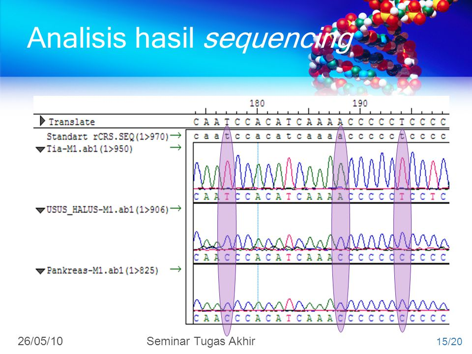 Analisis hasil sequencing