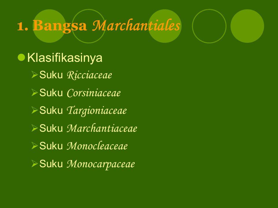 1. Bangsa Marchantiales Klasifikasinya Suku Ricciaceae