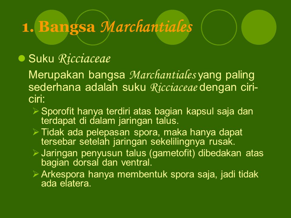 1. Bangsa Marchantiales Suku Ricciaceae