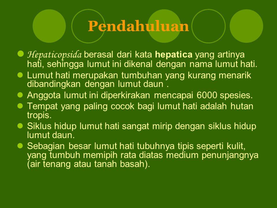 Pendahuluan Hepaticopsida berasal dari kata hepatica yang artinya hati, sehingga lumut ini dikenal dengan nama lumut hati.