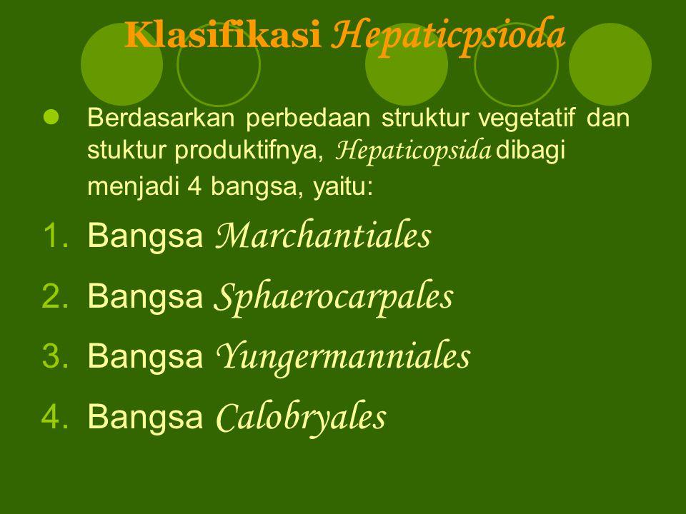 Klasifikasi Hepaticpsioda