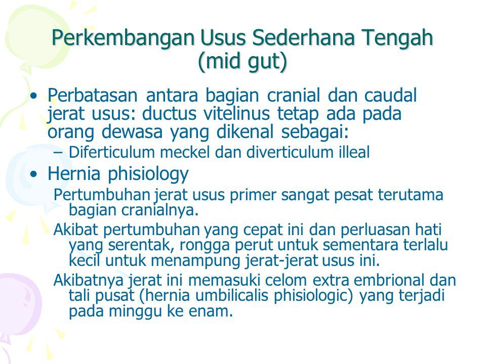 Perkembangan Usus Sederhana Tengah (mid gut)