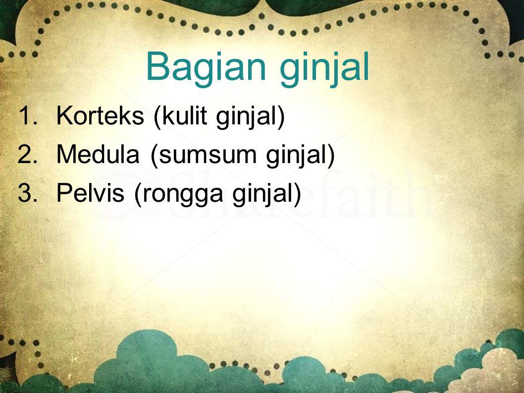 Bagian ginjal Korteks (kulit ginjal) Medula (sumsum ginjal)